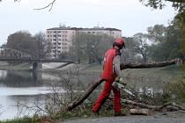 Specializovaná firma se pustila do ošetřování 145 stromů na břehu řeky Moravy v Uherském Hradišti.
