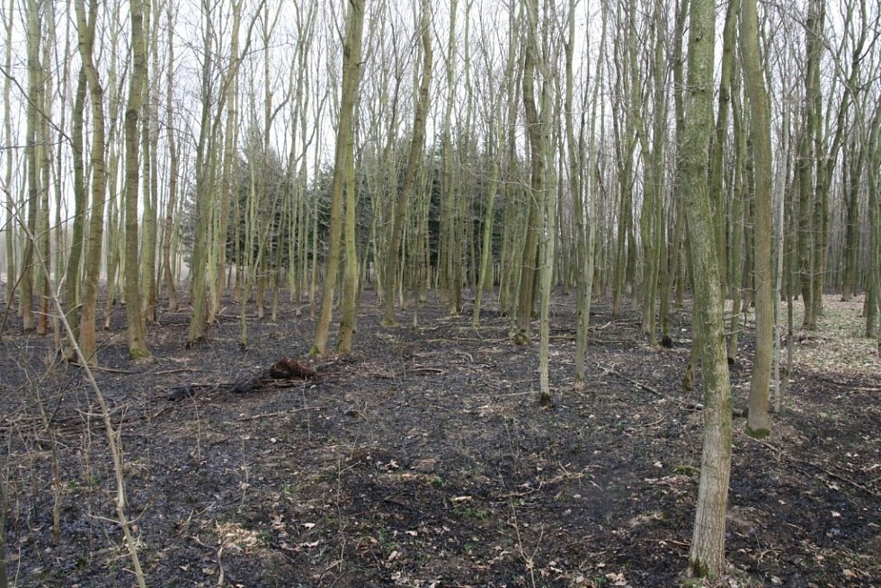 Hasiči likvidovali rozsáhlý požár trávy mezi Uherským Ostrohem a Moravským Pískem