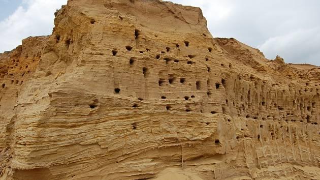 Pískovcové stěny v katastru Polešovic poskytují nejen známou stavební surovinu, ale jsou také hnízdištěm chráněné břehule říční.