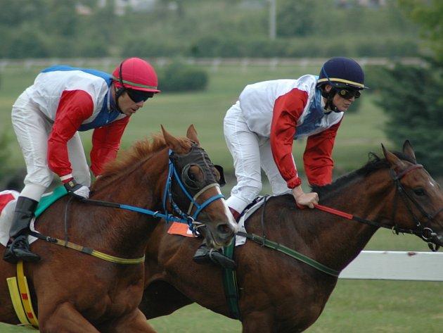 O pořadí koní někdy rozhoduje každý centimetr.