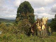 Vichřice přes dvě stě let starý strom asi zlomila.