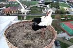 V pátek 5. dubna se vrátili čápi i do nově zbudovaného hnízda u staroměstské základní školy.FOTO: web kamera Základní školy Staré Město