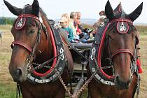 Koně čekali na povel vozky k vyražení do terénu.