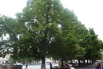 Zeleň na uherskohradišťském Masarykově náměstí. Ilustrační foto