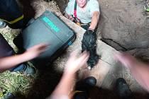 Pád psa Čivavy do dva metry hlubokého a třicet centimetrů širokého vrtu na zahradě rodinného domu ve Starém Městě zalarmoval ve čtvrtek 27. června večer celkem tři jednotky hasičů.