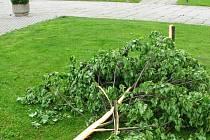 Poražený strom.