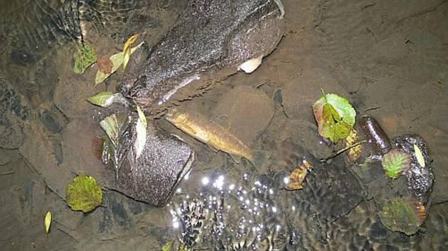 Neznámá látka v potoku otrávila desítky ryb.