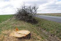 O likvidaci třešňové aleje, lemující silnici z Nivnice do Dolního Němčí,rozhodla obecní rada v Nivnici. Ve čtvrtek 6. března 2014 zbyly po 77 stromech jenom pařezy.