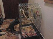 NELINKA.  První setkání s papoušky.