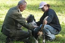 V PARKU. Pod zeleným baldachýnem stromů v zámecké zahradě Buchlovice se uskuteční v sobotu výstava psů všech plemen.