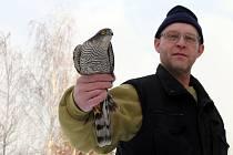 Dolněmčan Kamil Válek našel poraněného krahujce obecného.