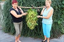 Slavnostní hrozen upletený Marií Ingrovou a Ludmilou Drobilovou ponesou krojovaní v čele sobotního průvodu na Slavnostech vína.