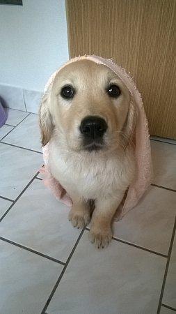 JESSI.  Ráda pózuje jako modelka ipo koupeli.
