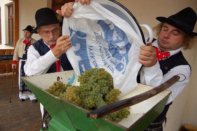 V Buchlovicích se v neděli odpoledne uskutečnilo tradiční žehnání vínu. Přímo na náměstí chlapi z Folklorního studia Buchlovice hrozny vylisovali, zjistili jejich cukernatost a místní páter hroznovou šťávu pokřtil.