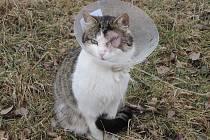 Pacinovi musel veterinář vzít oko