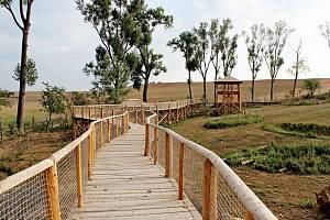 NOVÁ ATRAKCE. V hektarové  pratuří obůrce na Modré finišuje budování dřevěné stezky.