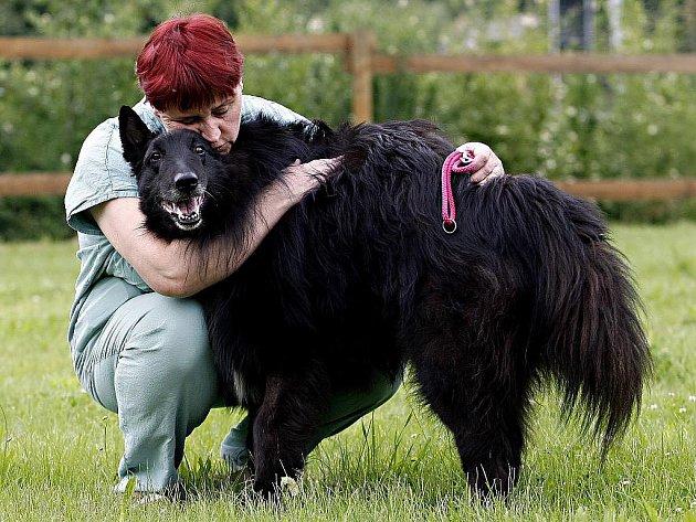 Belgický ovčák. Ilustrační foto.