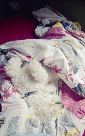 KESINKA. Někdo ráno rád vyspává.
