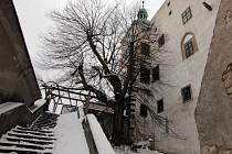 Lípa neviny na hradě Buchlově. Ilustrační foto.