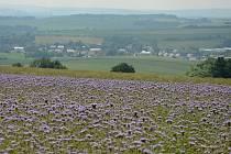 Na březích Svodnice leží Sazovice, vesnička má milená...