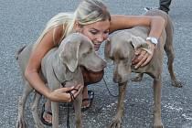 Výstava psů na Studentském náměstí v Uherském Hradišti