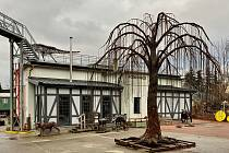 Ojedinělá sedmimetrová kovová vrba s názvem Strom života, která nemá v obdoby v tuzemsku ani v Evropě, vyrostla od konce loňského května do začátku letošní druhé prosincové dekády v unikátní KOVOZOO ve Starém Městě.