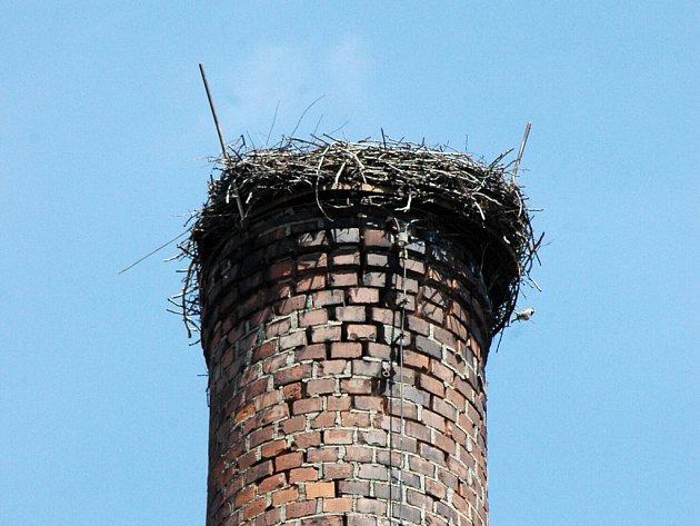 V Drslavicích se čápi vracejí do hnízda na komíně bývalého mlýna.