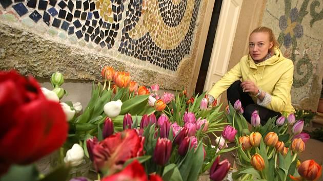 Příprava výstavy tulipánů na zámku v Buchlovicích.