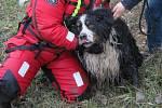 Bernský salašnický pes, kterého v Kněžpoli hasiči zachránili z řeky Moravy
