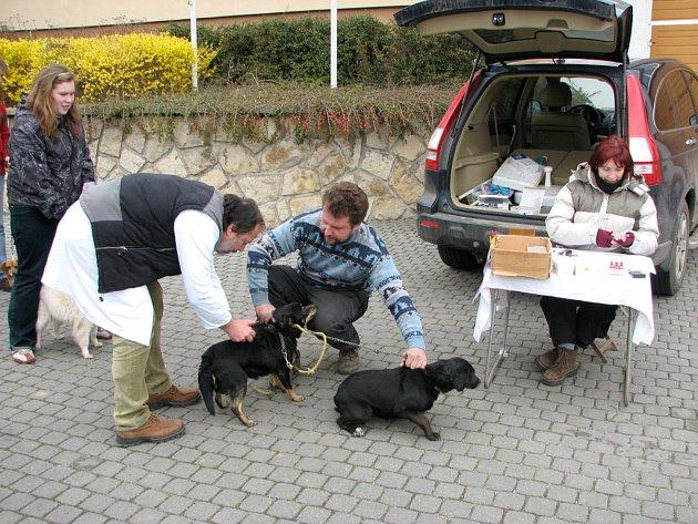 Na píchnutí vakcíny proti vzteklině přivedli Velehradští malé i velké psy.