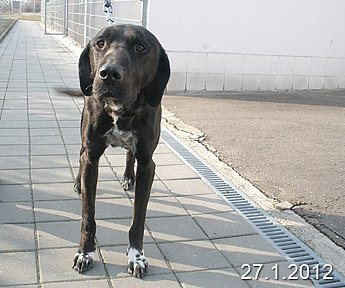 Pes zútulku: Jimbo