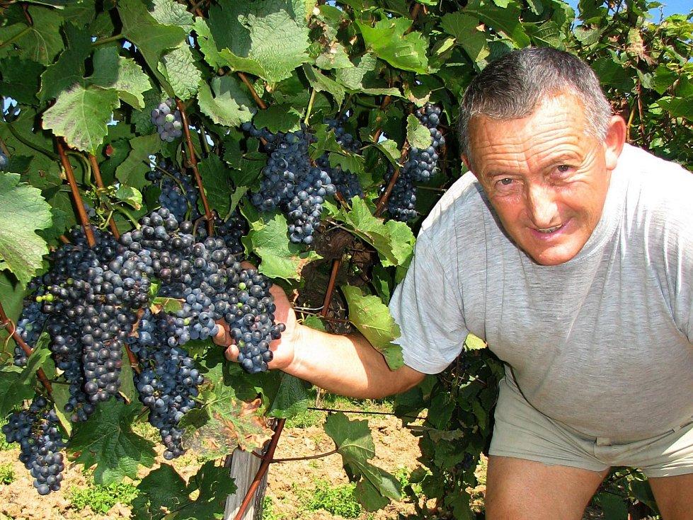 Někteří vinaři Slovácka ochraňují úrodu hroznů sítěmi.