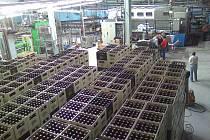 V uherskobrodském pivovaru otevřeli novou stáčírnu, která vyprodukuje 20 tisíc lahví za hodinu.