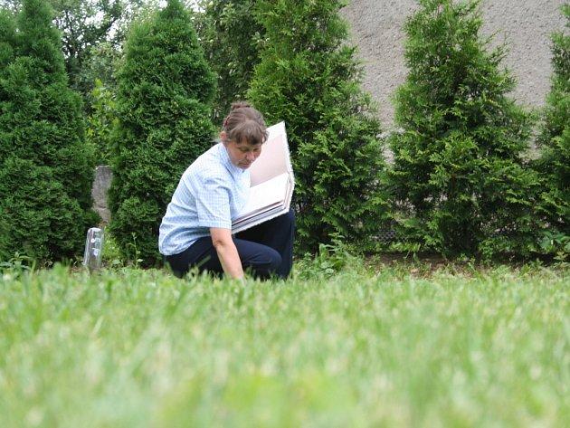Marie Hrubá z Vizovic studuje pokusy s travními směsmi, které jsou k vidění před firmou Agriservis v Lípě na Zlínsku.
