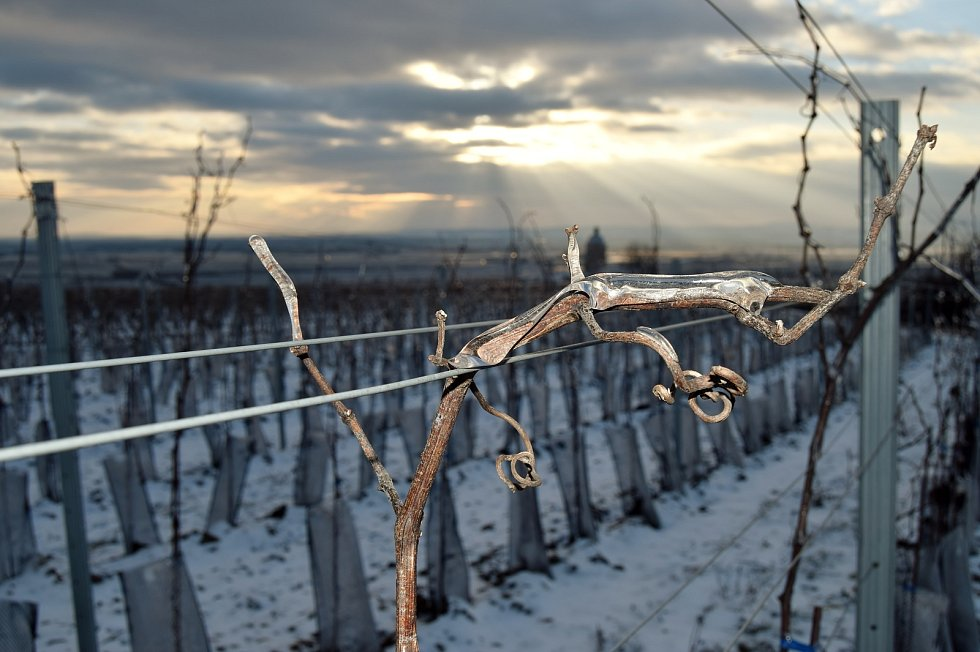 Zima ve vinohradech. Ilustrační foto