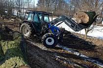 Povodí Moravy začalo v úterý 21. února kácet lípovou alej podél Moravy v Uherském Hradišti kvůli stavbě protipovodňových hrází.