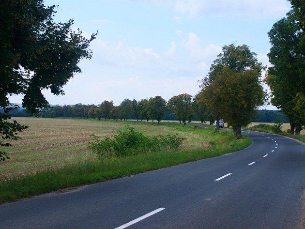 Lipová alej u Uherského Ostrohu ve směru na Moravský Písek se stala Alejí roku 2013 Zlínského kraje.