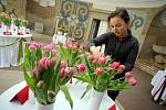 Příprava výstavy Tulipánie na zámku v Buchlovicích.