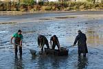 Podzimní výlov ryb na rybnících Rybochovného střediska na Staroměstských loukách, obhospodařovaného pobočným spolkem Moravského rybářského svazu (MRS) v Uherském Hradišti.