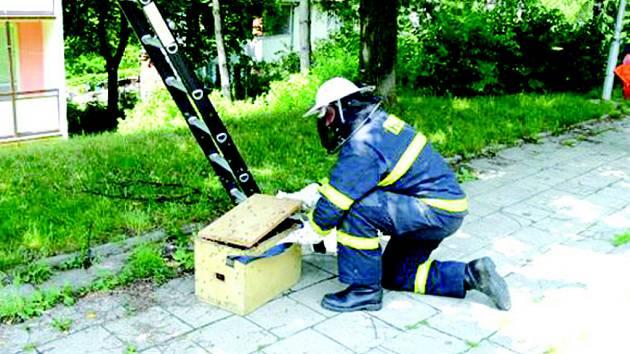 Zásah hasičů pro včely znamená jasnou smrt.