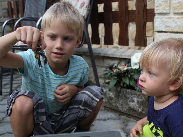 Několik kusů raků se podařilo zachránit na Smraďavce sedmiletému Ondrovi  Polákovi. ... aded3acaed