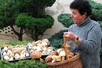 Anna Pospíšilová z Velehradu se svým houbařským úlovkem.