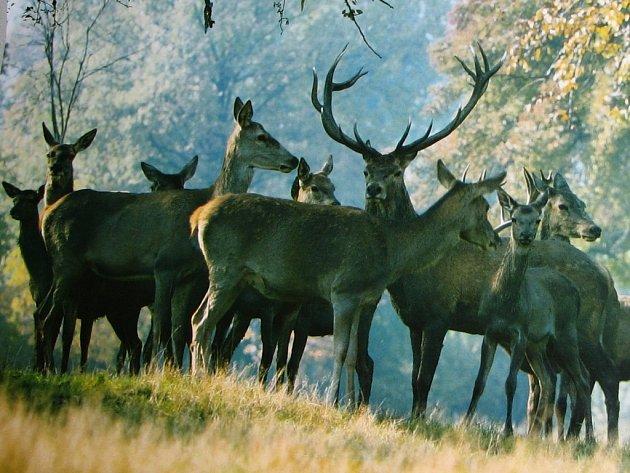 Milostné vášně ze strany jelenů a laní po říji ustoupí.