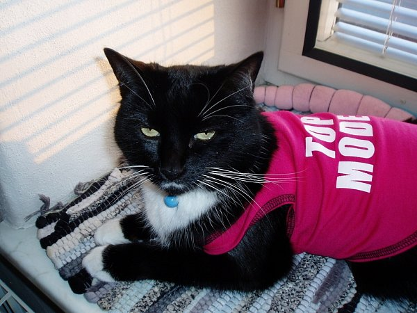 AMI-ŠAA. Naše kočka je topmodelka.
