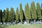 Túje na pitínském hřbitově mají být pokáceny.