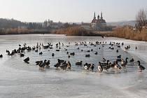 Mokřad Žabinec na Velehradě nezamrzá ani v v těchto mrazech.