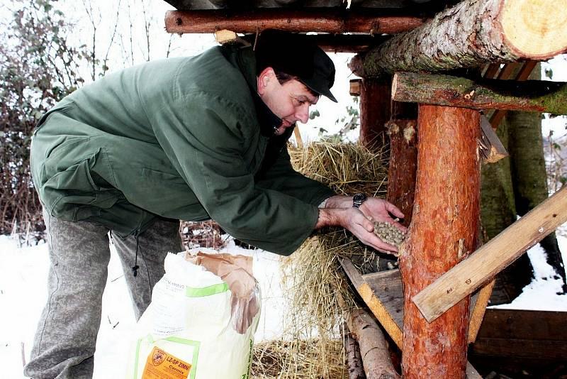 Myslivci se musejí vzimě vypravit svhodnými krmivy za zvěří.