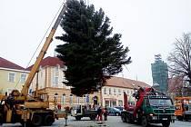 Už v pondělí vztyčili na uherskobrodském Masarykově náměstí vánoční strom, včera pak jeho větve pověření pracovními vyzdobili všelijakými ozdobami a světýlky.