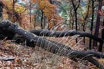 Odvěké přátelství stromů a skal na život a na smrt.