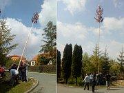 Tradici stavění májek dodržují v Komenského ulici v Dolním Němčí už šedesát let.